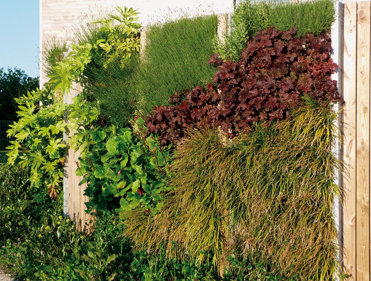 Mur végétalisé pour habillage du local à vélos - Vendée -