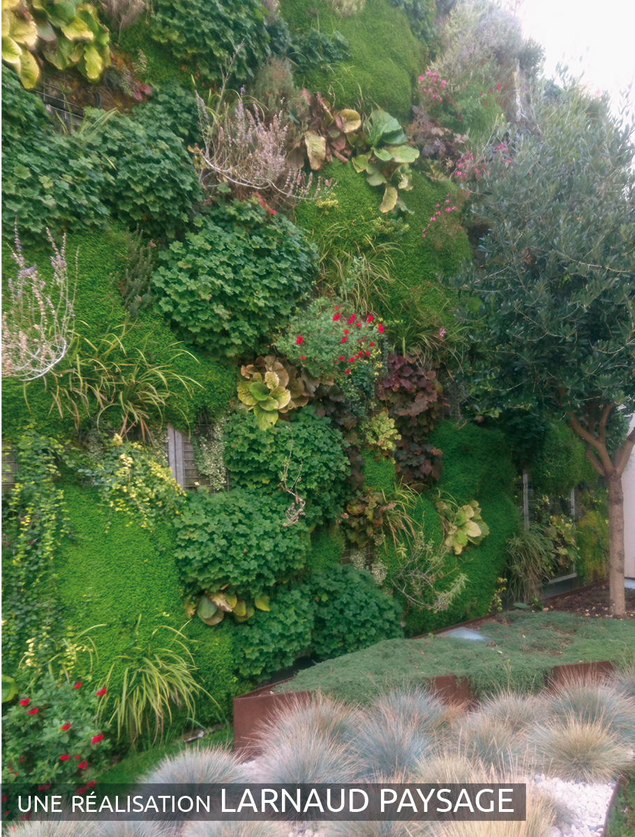 Mur végétalisé d'une cour intérieure - Charente Maritime -