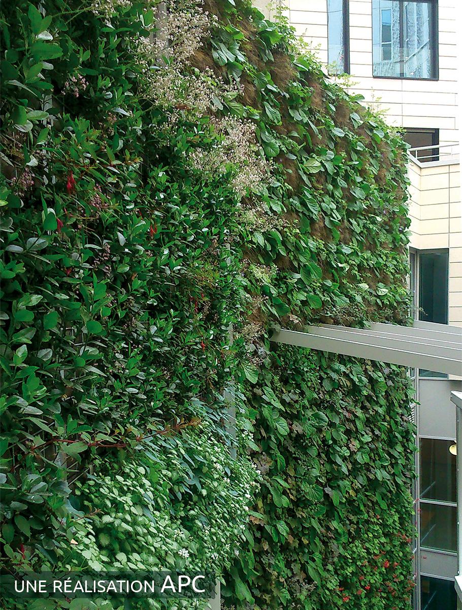 Murs végétalisés d'un ensemble immobilier - Paris -