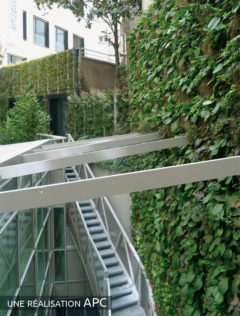 Murs végétalisés d'une cour intérieure - Paris -