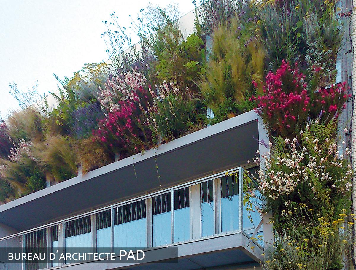 Mur végétalisé au printemps - Vendée -