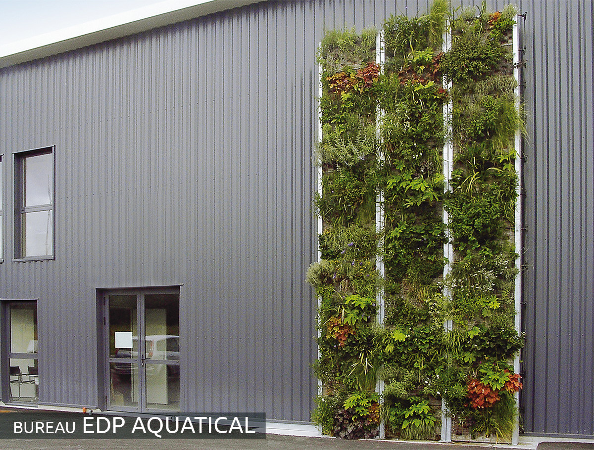 Mur végétalisé après 4 mois en pré-culture - Loire Atlantique -