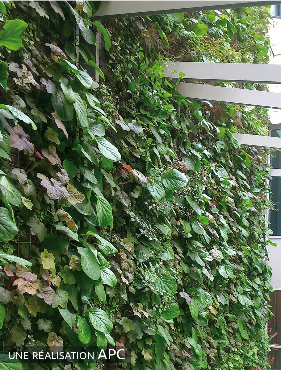Mur végétalisé 1 face épaisseur 15 cm - Paris -