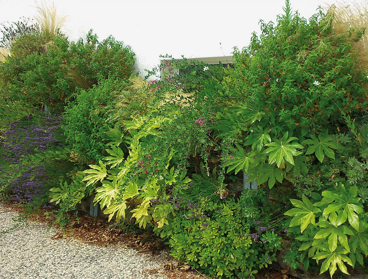 Mur 1 face avec végétaux à fort développement - Vendée -