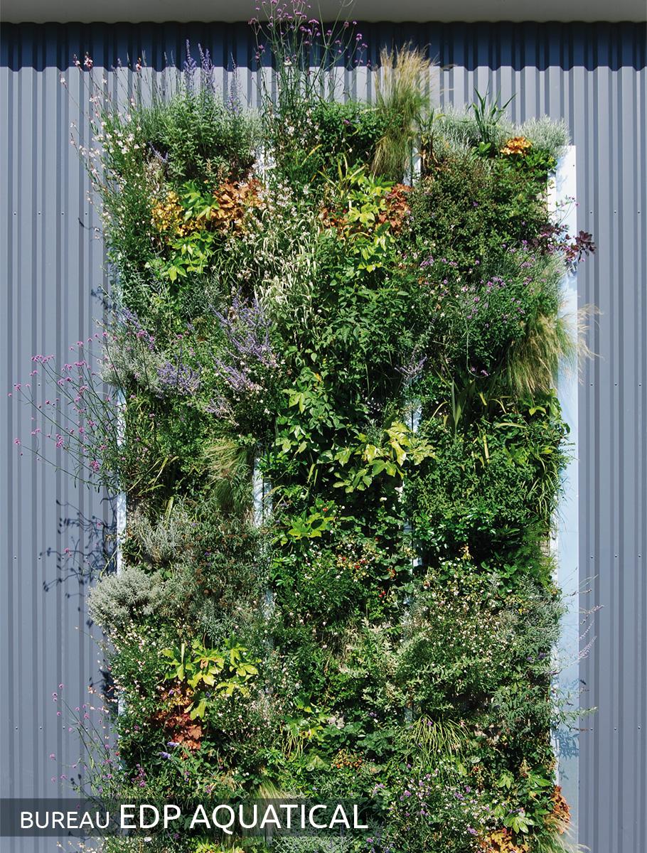 Mur végétalisé 2 mois après la pose - Loire Atlantique -