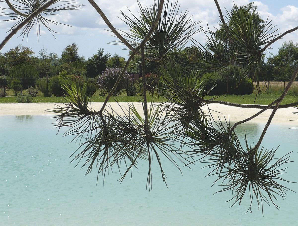 Les plaisirs de la baignade naturelle en eau saine - Vendée -